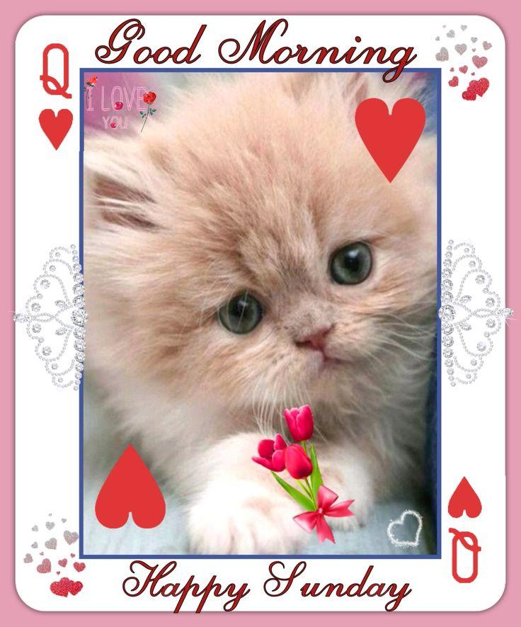 Risultati immagini per kitten happy sunday