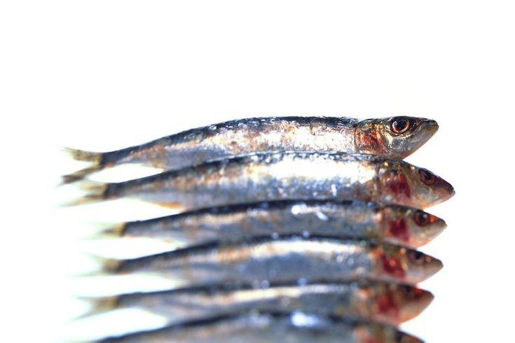 ¿Las sardinas son una buena fuente de calcio?. Ya sea porque son económicas, de sabor intenso o porque por lo general se encuentran en una lata, las sardinas son generalmente consideradas como comida baja gama en los Estados Unidos. Estos pequeños y abundantes peces son tan nutritivos como ...