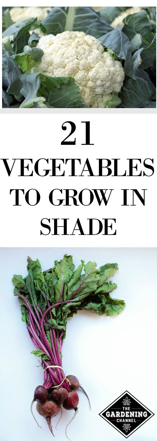 3681 Best Grow Food Not Lawns Gardening Tips And Ideas 400 x 300