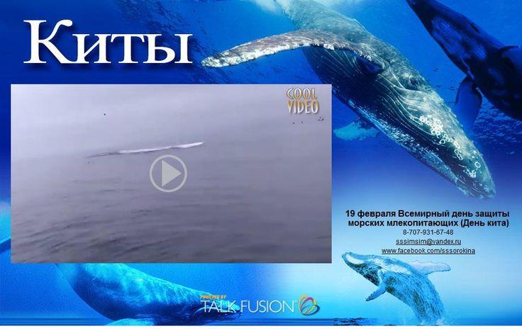19 февраля Всемирный день защиты морских млекопитающих (День кита)!  Смотрите видео: