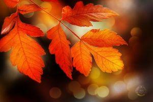 /Perfect Autumn