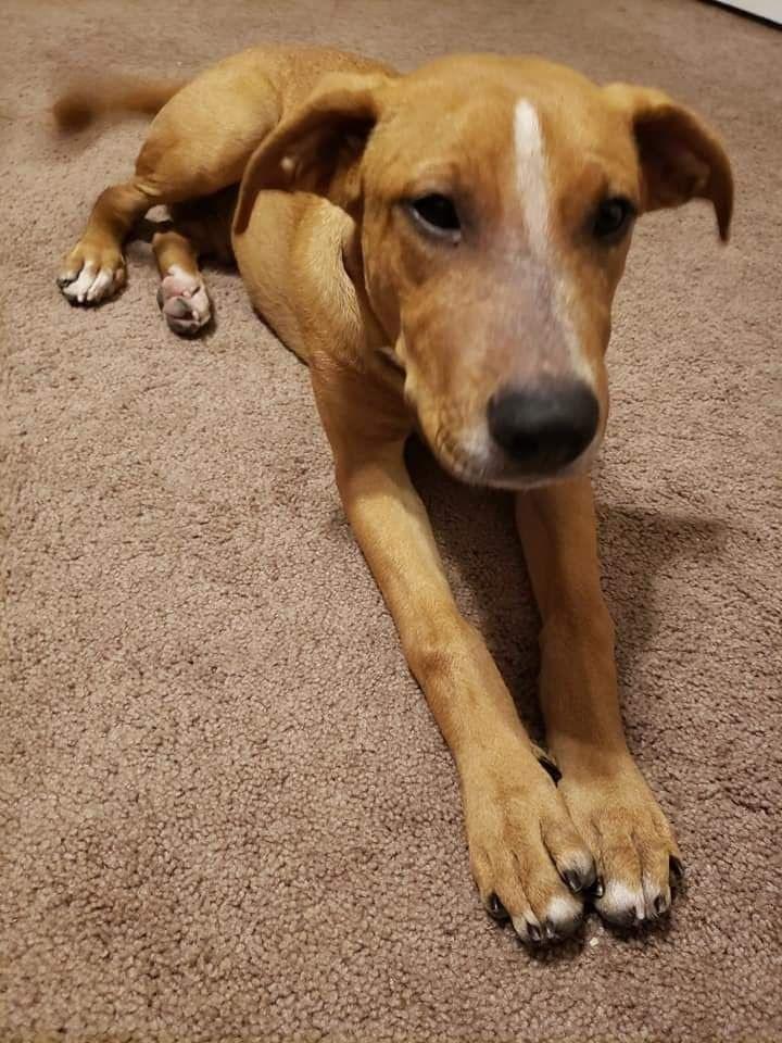 Adopt Bones On Petfinder Dog Adoption Dogs Pets