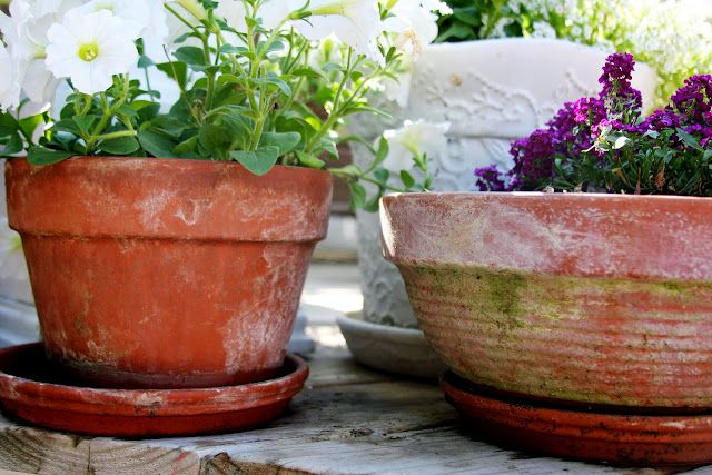 How to age your clay pots. Working on a few now!: Flowers Gardens, Gardens Ideas, Mossy Terracotta, Terracotta Pottery, Mossy Pots, Gardens Projects, Cotta Can, Age Pots, Clay Pots