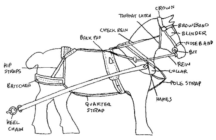 parts of a horse harness diagram