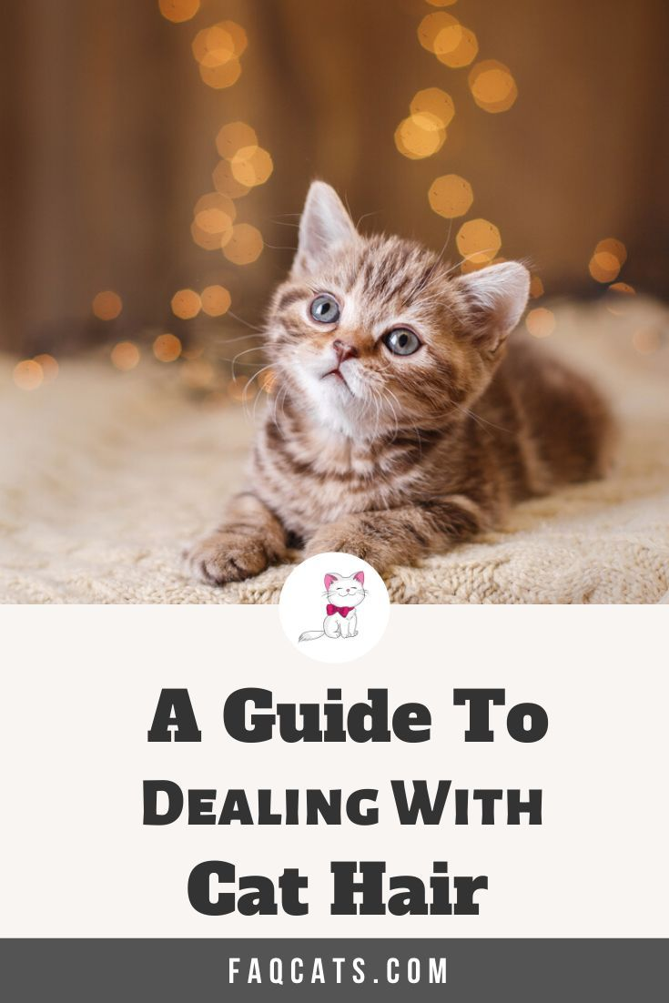 Dealing With Cat Hair And Shedding In 2020 Cute Cats And Kittens Cats Tabby Cat