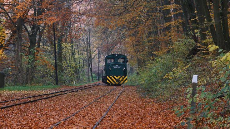 Forest railway in autumn.  Erdei vasút az őszben.