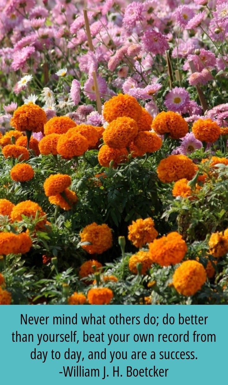 Head to the webpage to read more about gardenideas