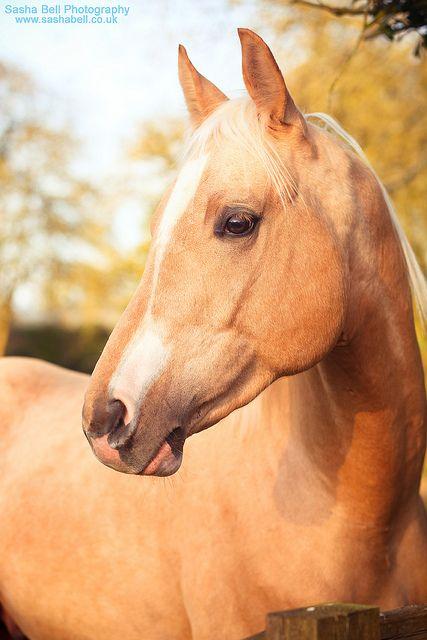 Best 20 Horse Head Ideas On Pinterest Horse Horse
