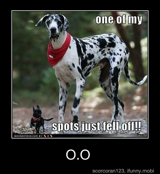:): Great Danes, Small Dogs, Greatdanes, Funny Animal, Chihuahua, So Funny, Little Dogs, Big Dogs, Running Away