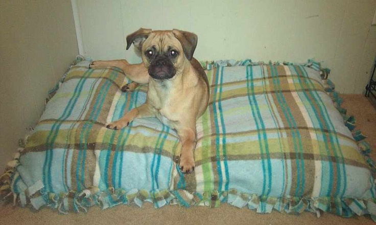 Tie blanket dog bed... Cheap to make, comfy for the dog