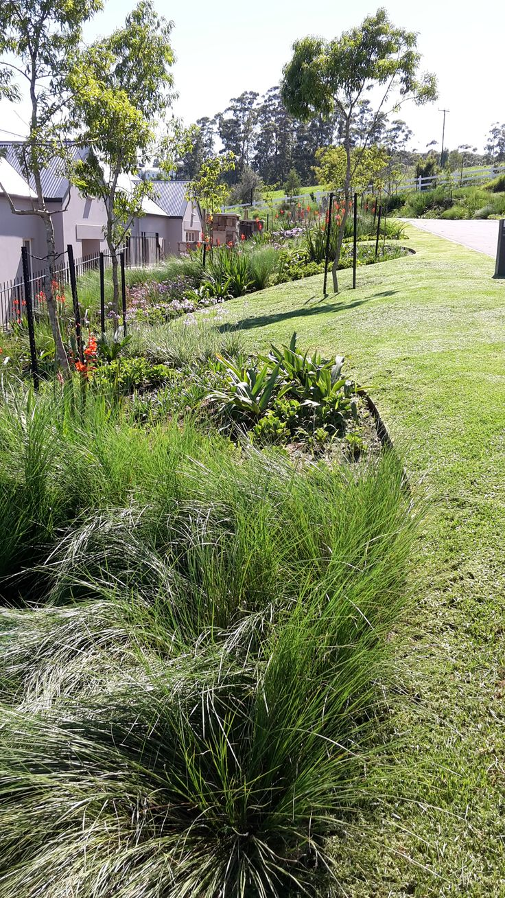 Low Maintenance Indigenous Grasses And Perennials In Bold Sweeps With Natal  Lavender And Dogwood Trees For