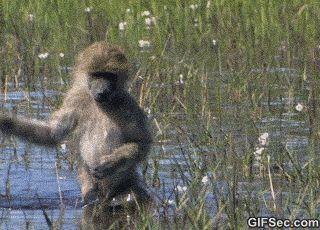 The swamp is NASTAY, girl!