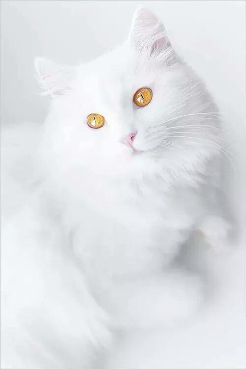 White beauty!❤❤