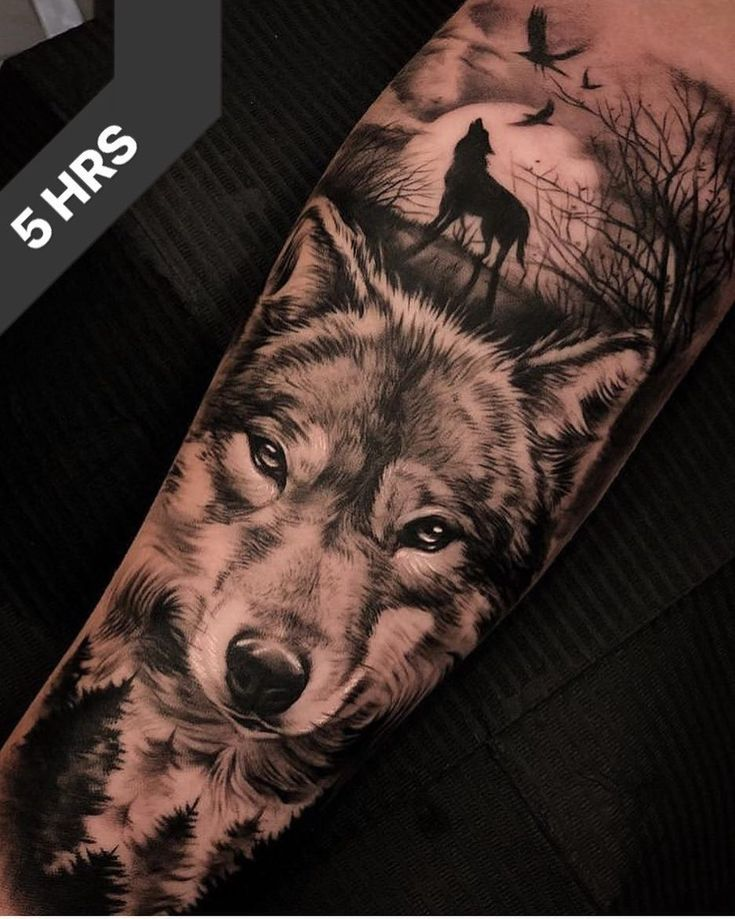 5 hours through this magnificent nature / wolf scene. ___ – #this #DURCH # Great #nature #hours