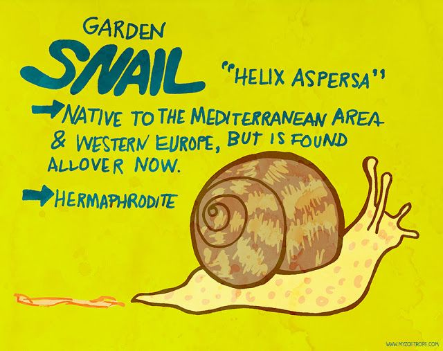 365 Days of Animals by My Zoetrope 254: Snail Pen/Ink/Digital