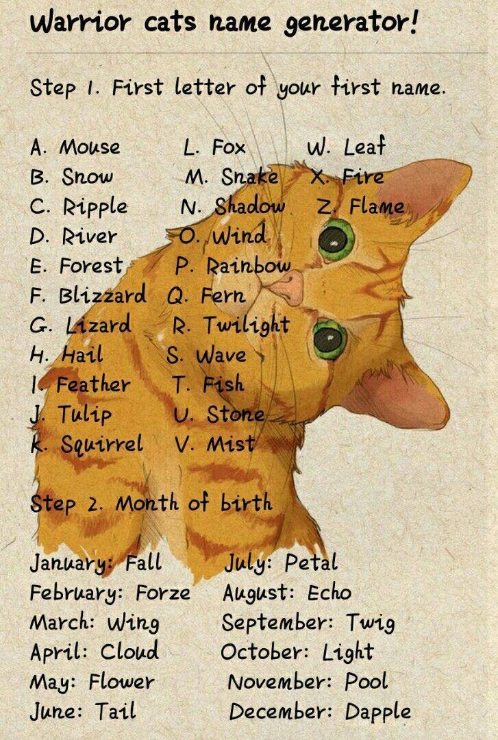 Cats Vinegar Shippingcatscost Frontlinecatscheapest Mit Bildern