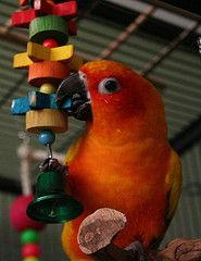Best Food For Peach Fronted Conures