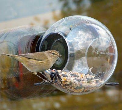 Bem Legaus!: Passarinhos transparentes