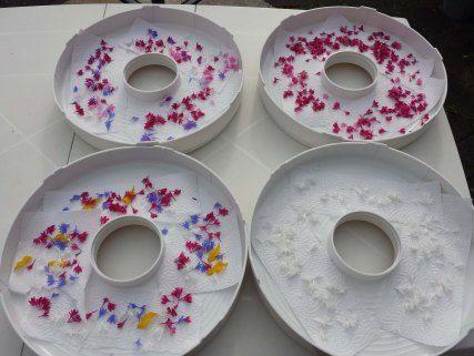 Blüten trocknen mit dem Rommelsbacher Dörrautomaten DA 750 - von: Lebenundgeniessenblog