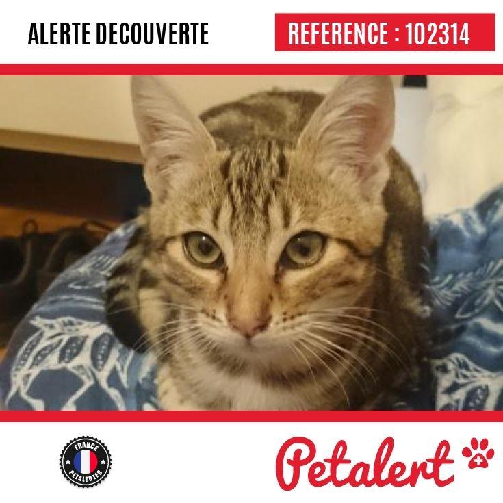 05.10.2016 / Chat / Le Touvet / Isère / France