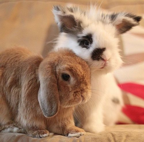 For Bunny Lovers Only: Eddy + Rambo | I follow @Charity Pilkinton on Instagram and I absolutely ADORE Rambo!  forever in my heart.