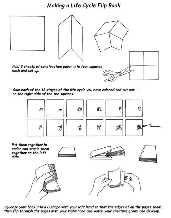 15 best images about flip book ideas on Pinterest | Toys, How to ...