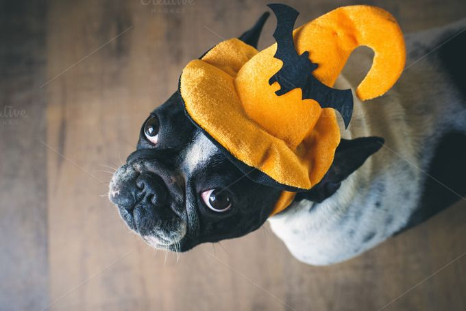 Dog in disguise for Halloween by Kiko Jimenez Fotografia on @creativemarket