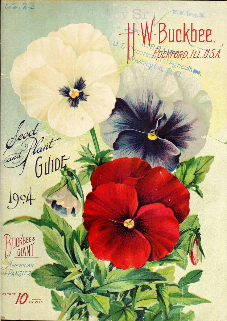 H.W. Buckbee seed and plant guide 1904