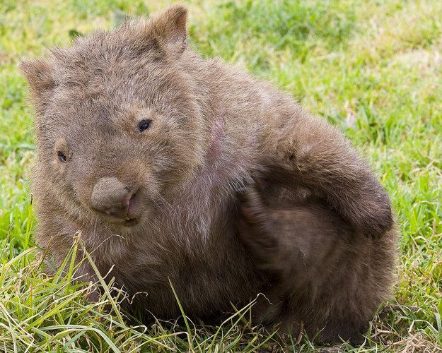 """Are you a wombat? Cause that booty knocked me off my feet."" 