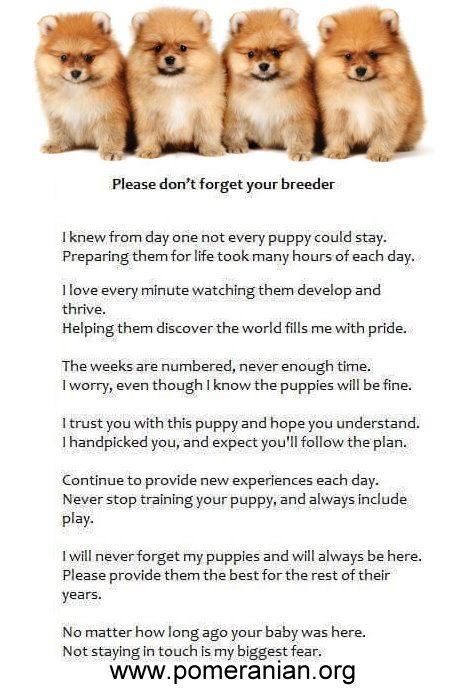 Please Don T Forget Your Breeder Pomeranian Dogs Pomeranian