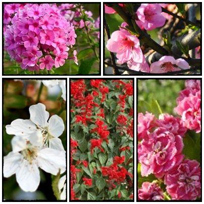 seed, grow, home, homesteading, farm, flowers, vege, nasiona, rozsada, warzywnik, zioła, kwiaty, byliny, ogród