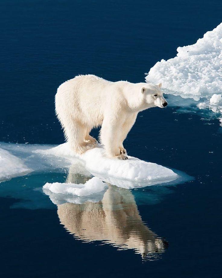 Арктика открытки