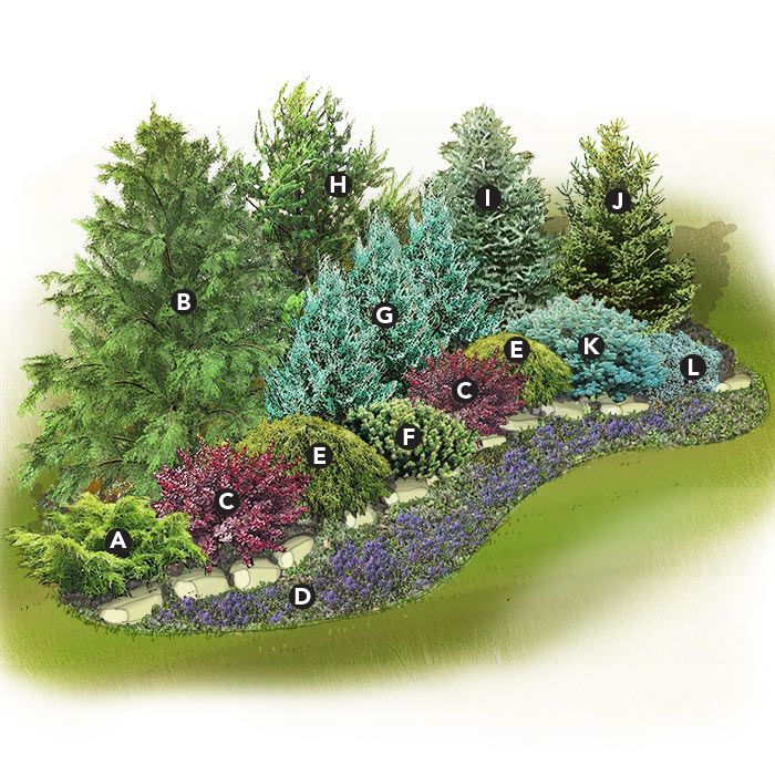 Low maintenance & bird-friendly evergreen screen - A) Juniperus x pfitzeriana 'Gold Coast'; B) Canada hemlock; C) Japanese barberry (Berberis thunbergii 'Atropurpurea'); D) Bugleweed 'Variegata'; E) Threadleaf false cypress 'Golden Mop'; F) Bird's-nest spruce'Nidiformis'); G) Juniperus scopulorum 'Wichita Blue'; H) Eastern white pine ; I) Colorado blue spruce; J) Black Hills spruce (Picea glauca var. densata); K) Compact blue spruce (Picea pungens); L) Juniperus squamata 'Blue Star'
