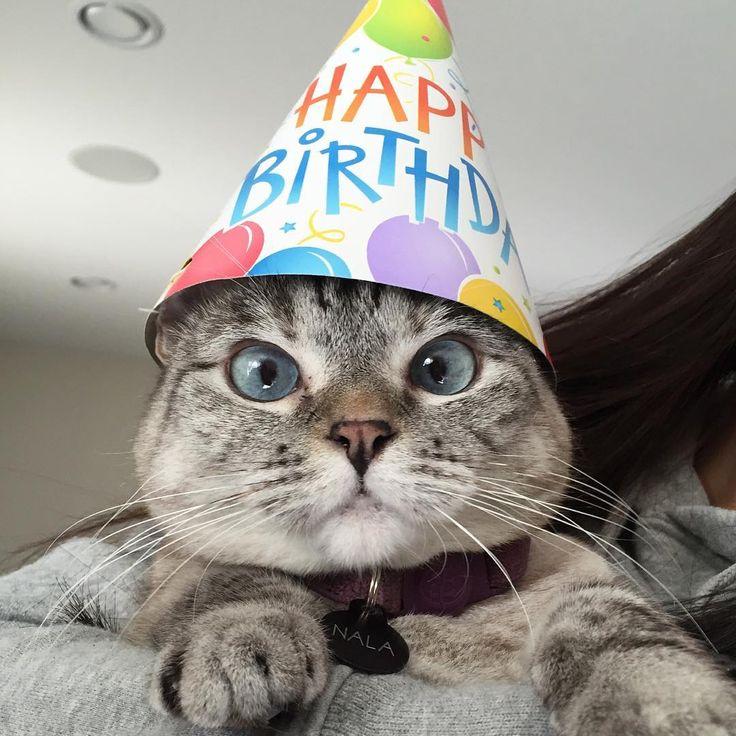 Happy birthday cat pictures