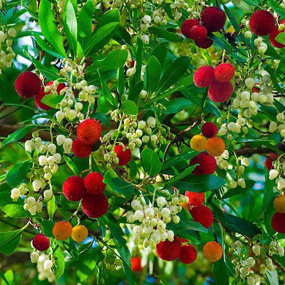 Die 25+ Besten Ideen Zu Exotische Blumen Auf Pinterest | Dahlien ... Garten Ideen Tropisch Exotisch Bilder