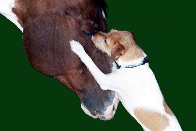 Jacks love the barn with the horses