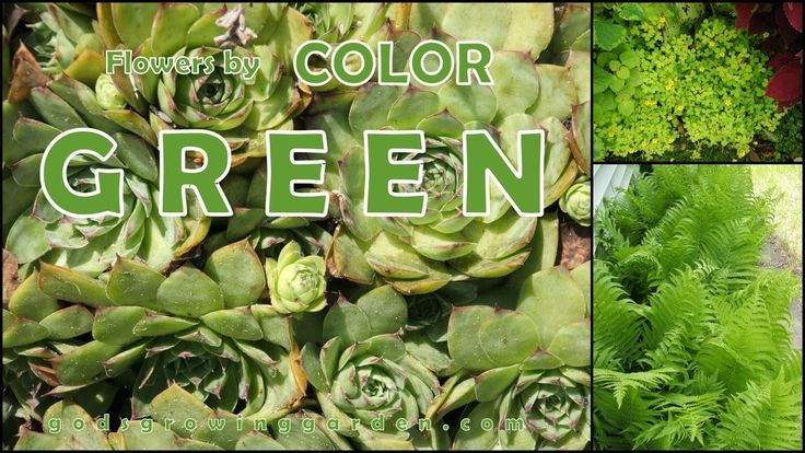 #flowers by color - GREEN by: http://www.godsgrowinggarden.com/2017/07/flowers-by-color-green.html