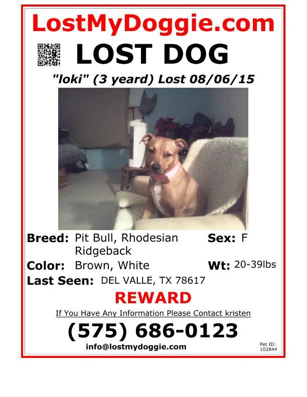 989 best LOST \ FOUND images on Pinterest Blues, Find pets and - found dog poster template