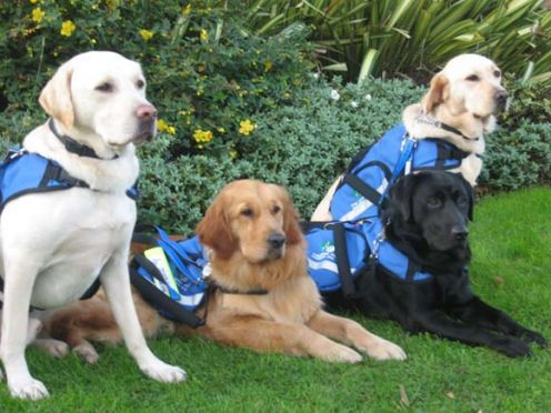 This is the story of Assistance Dogs for autistic children launched in Ireland