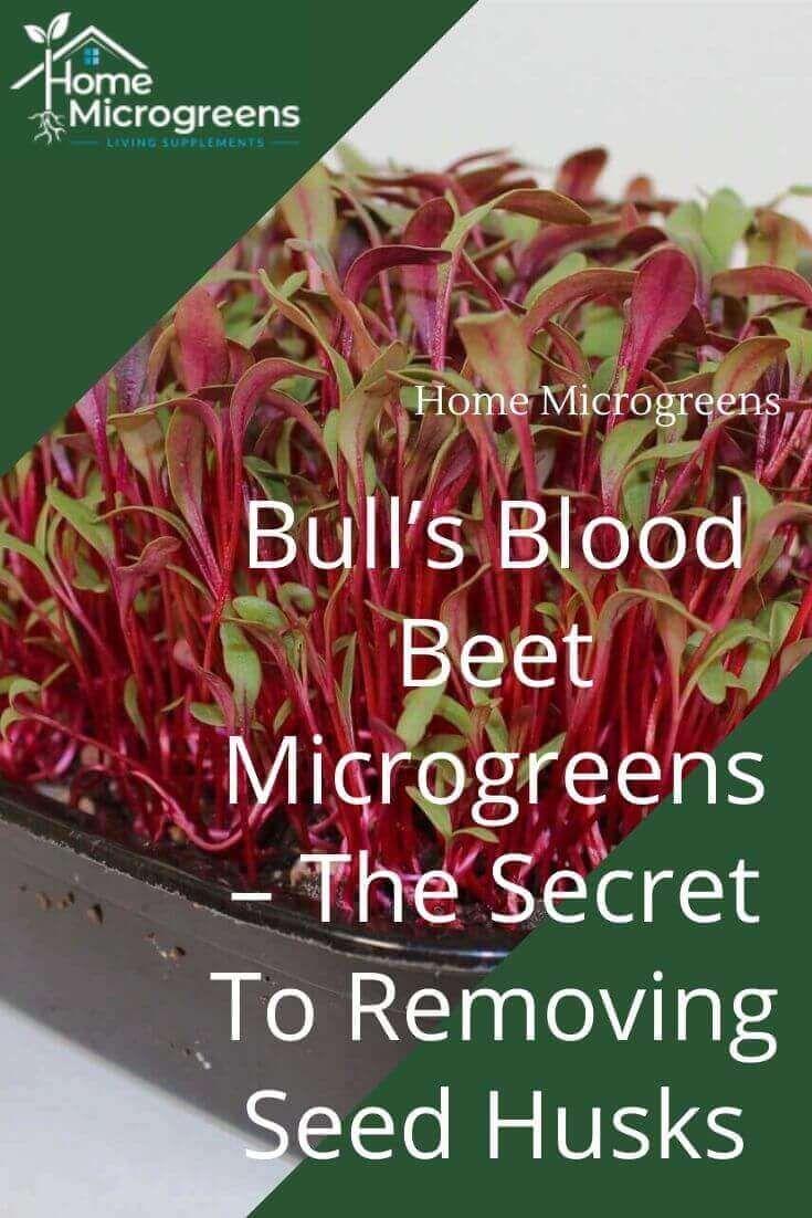 Pin On Microgreens