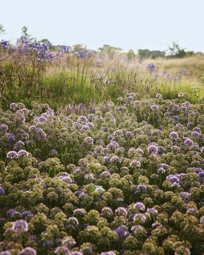 Piet Oudolf Nantucket Island Garden Of Weedin