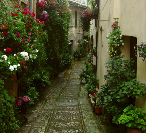 Spello (Molise)I would love to take walks on this pathway.