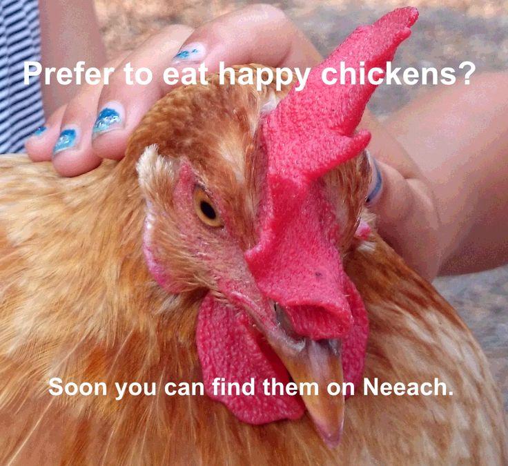 Find it on Neeach.