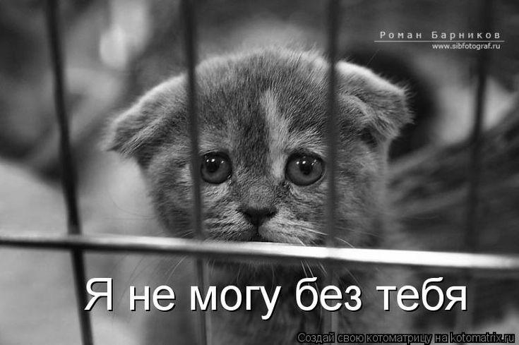 Картинки животных с грустными надписями, строителя картинках любимый