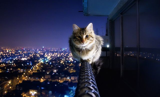 Crazy Ivory shot this amazing photo of his friend's cat perched on a balcony rail way high up on a building.