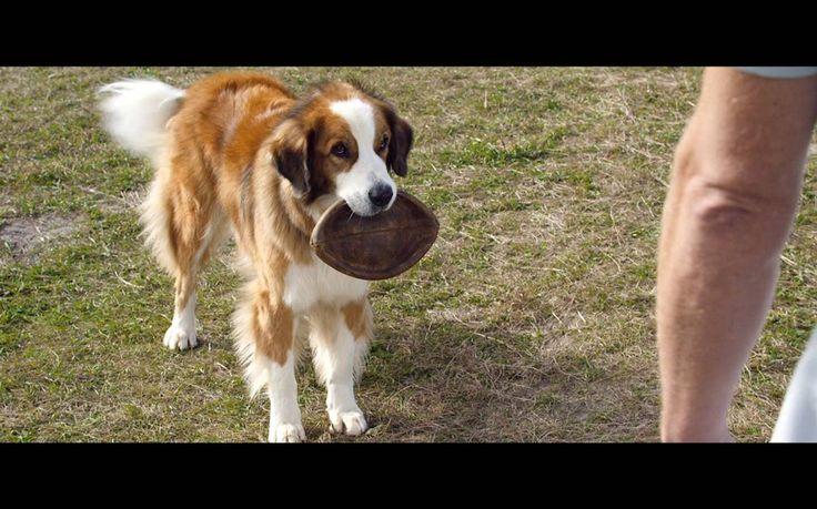 Watch A Dog S Purpose Megavideo