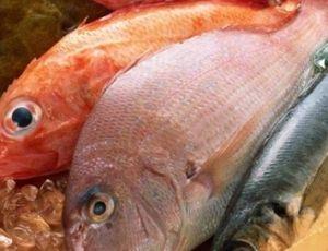 Stagionalità del pesce