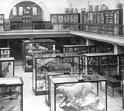 Horniman museum 1912 Anthony Sargeant I remember going to the museum from school (Haberdashers' Aske's) in the 1950s and it looked much the same as in this 1912 photograph
