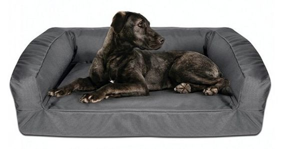 7 Indestructible Dog Beds For Chew Tastic Dogs Pets