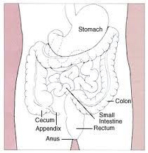 Recommended Colon Cleansers
